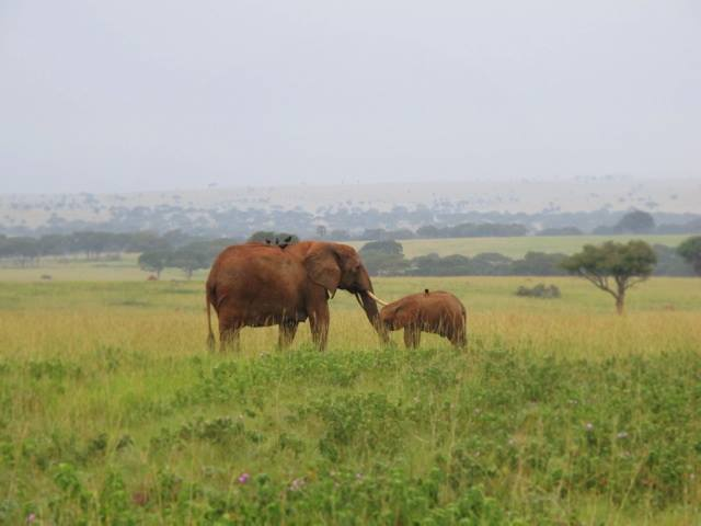 a mother and baby in Murchison Park, adjacent to Te Okot